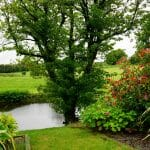 Combating climate change through landscaping