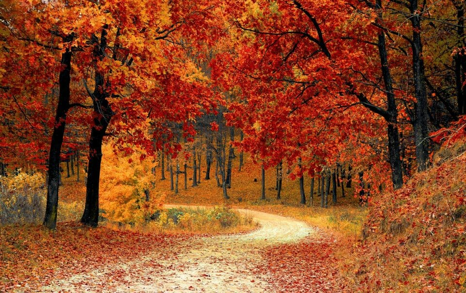 fall landscaping ideas